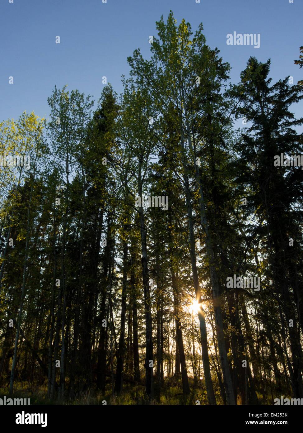 Boreal forest lines Dore Lake North of Saskatoon, Saskatchewan, Canada. - Stock Image
