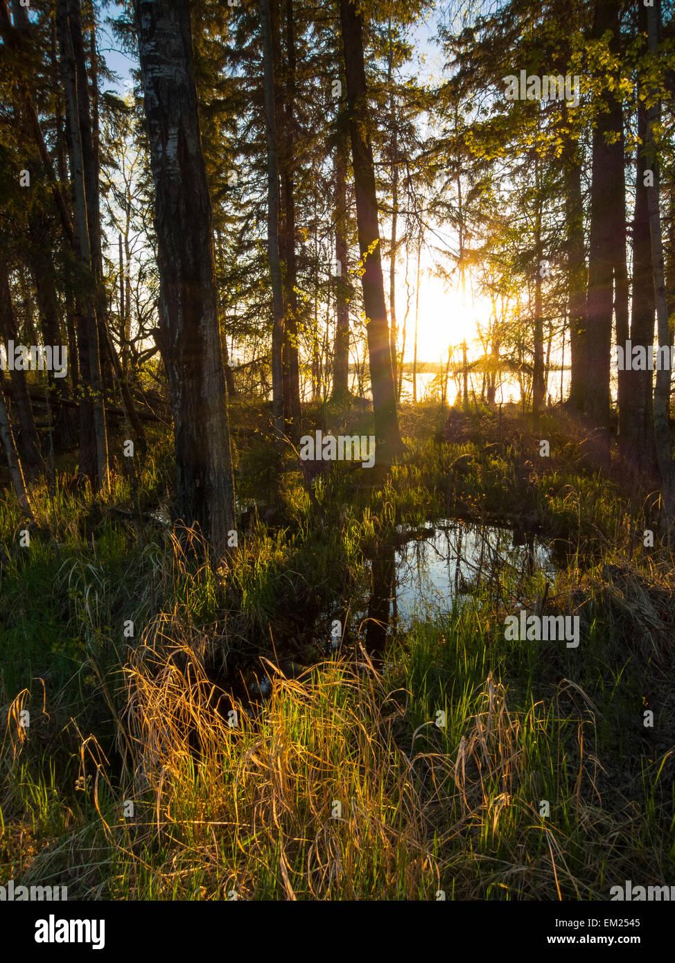 Snow melt pools in arboreal forest lines Dore Lake North of Saskatoon, Saskatchewan, Canada. - Stock Image