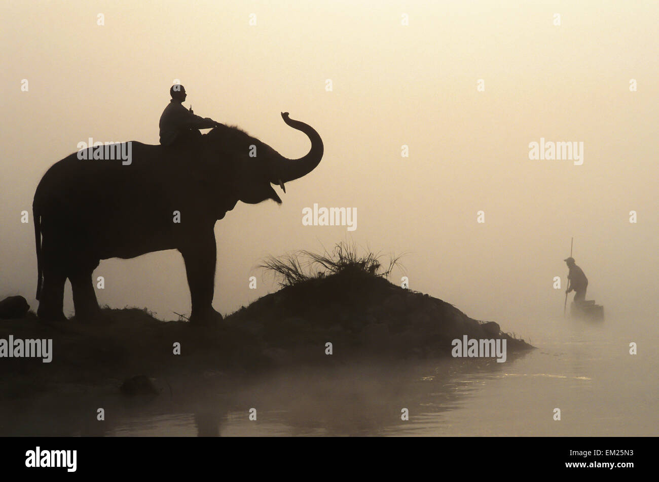 Dusk,Silhouette,Misty,Foggy,Paddle,Elephant,River - Stock Image