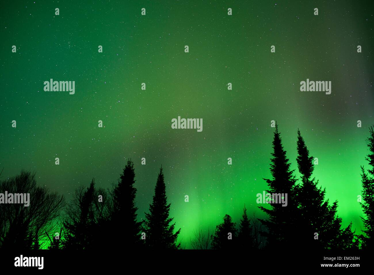 aurora borealis in northern minnesota stock photo 81183301 alamy