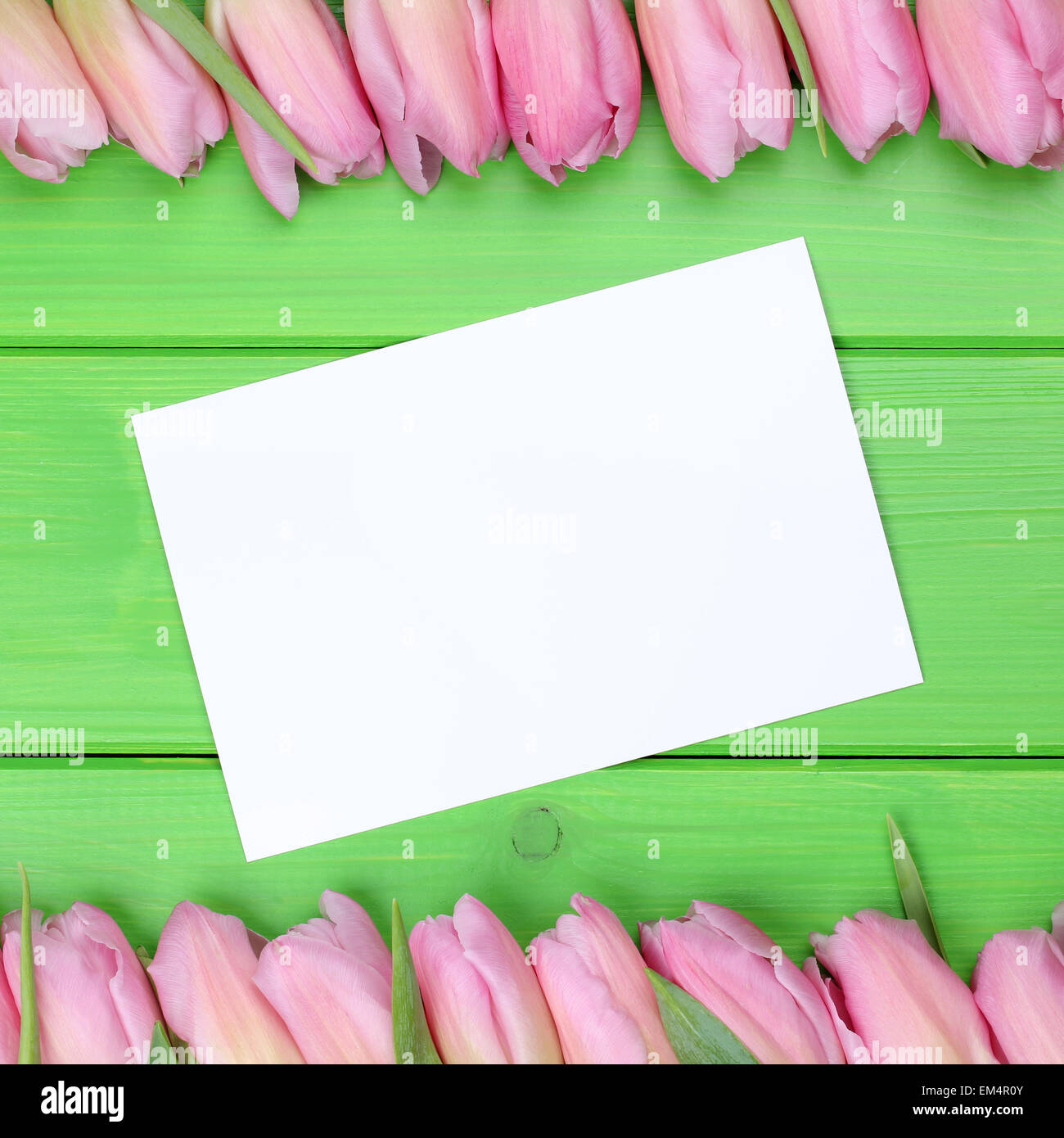 Tulips flowers in spring with greeting card and copyspace for your own text - Stock Image