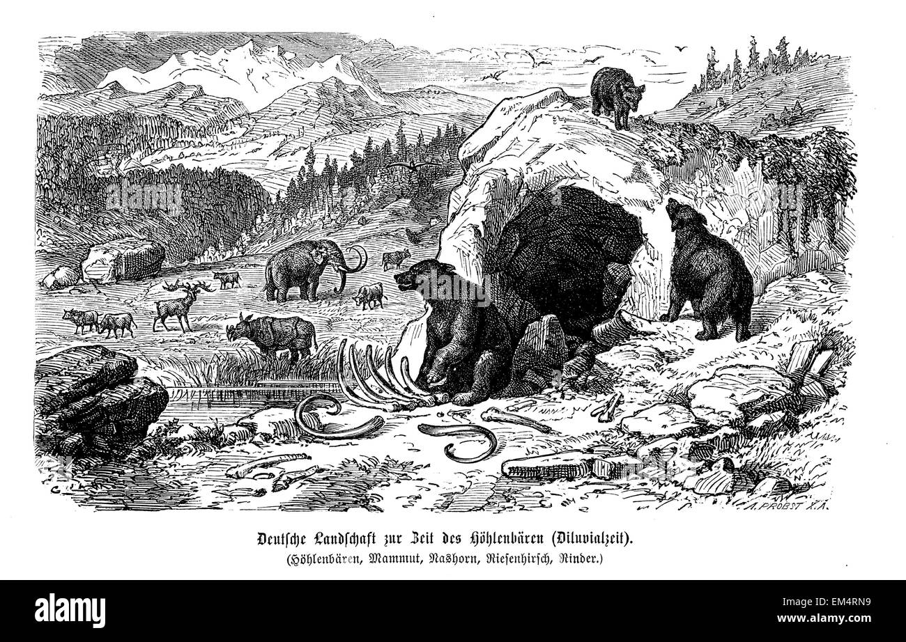 German countryside, cave bear,Pleistocene - Stock Image