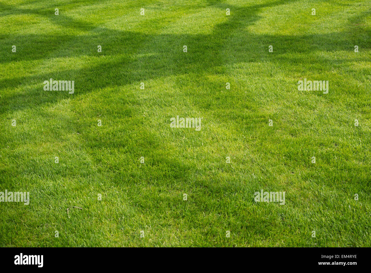 Tree shadow on mown grass lawn - Stock Image
