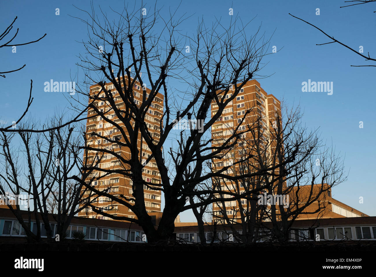 Silhoutette of trees in front of two council housing tower blocks in Southwark, London, UK. - Stock Image