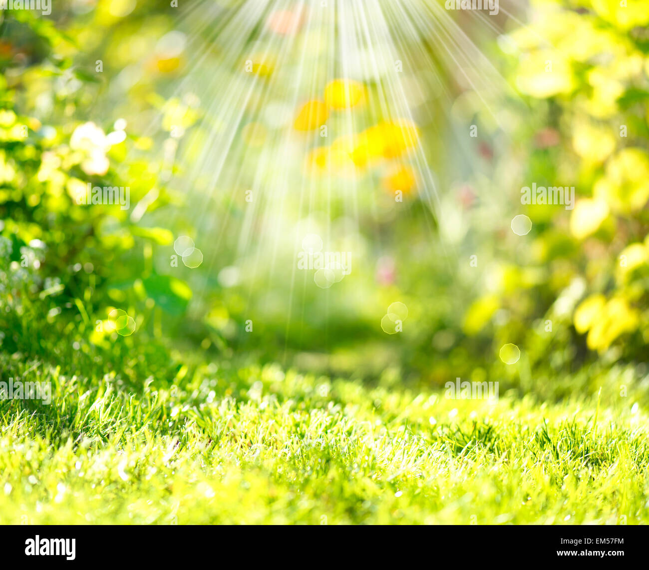 Nature Spring Blurred Background with Sunbeams - Stock Image