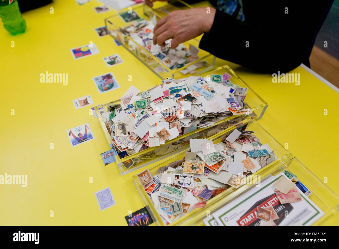 Man sorting used stamp collection - USA - Stock Image