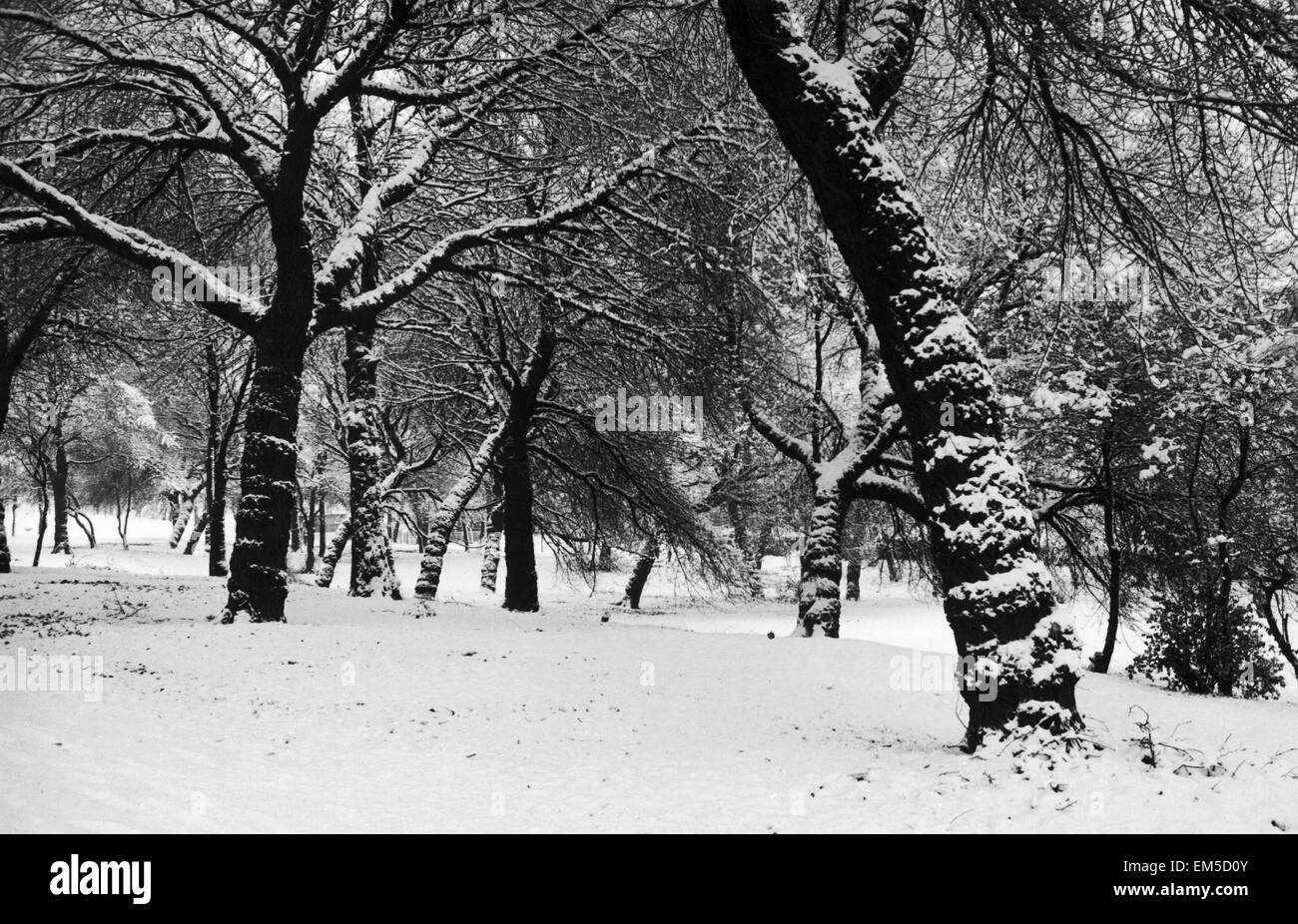 Queens Park Manchester Weather - Winter snow trees tree - Stock Image