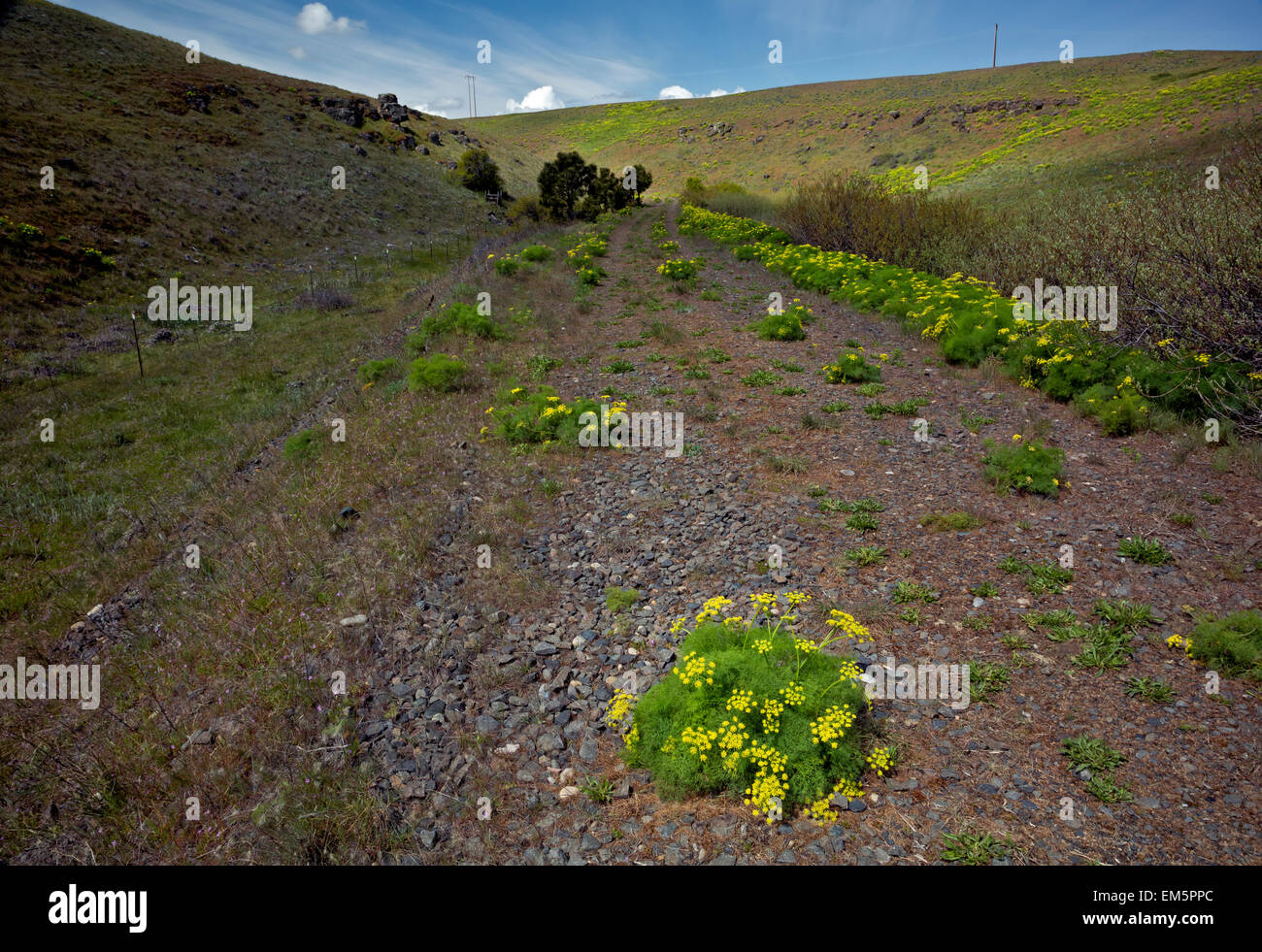 WA10318-00...WASHINGTON - The Klickitat Trail, an old railroad grade, near Harms Road. - Stock Image