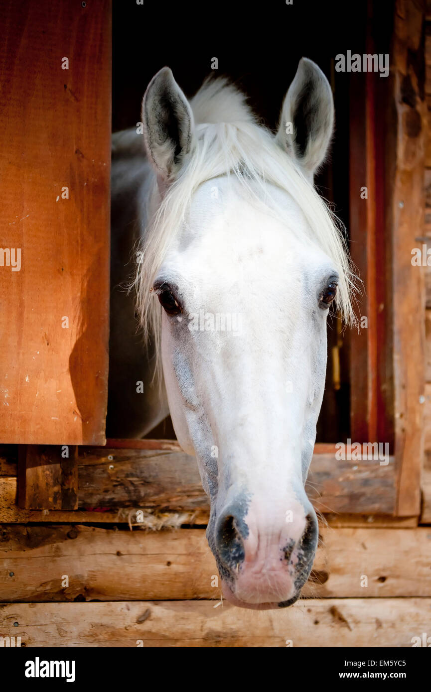 Horse Looking Out Barn Door Stock Photos Amp Horse Looking
