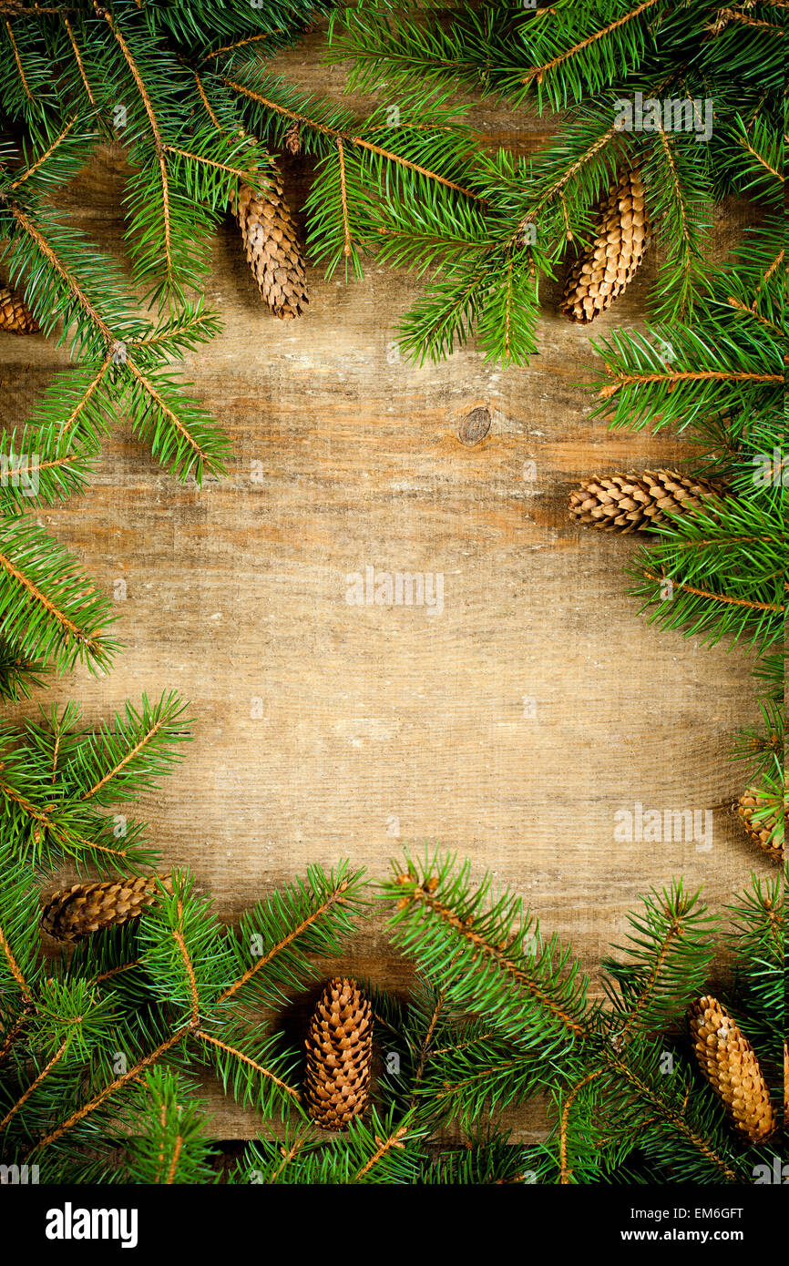 christmas fir tree with pinecones - Stock Image
