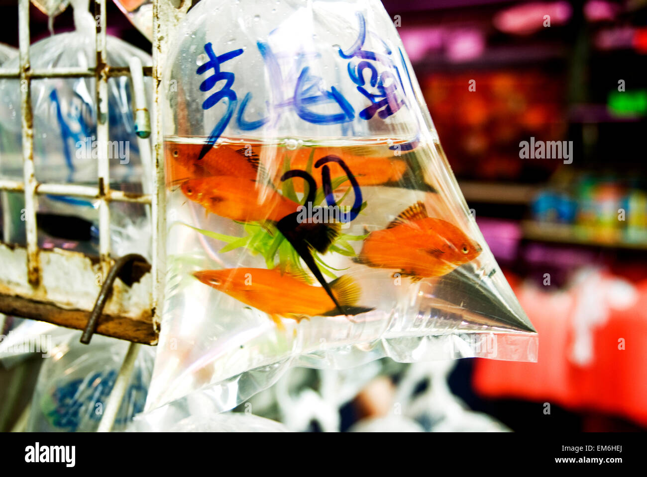 China, Mong Kok K; Hong Kong, Gold Fish For Sale In Small Store on Shanghai Street - Stock Image