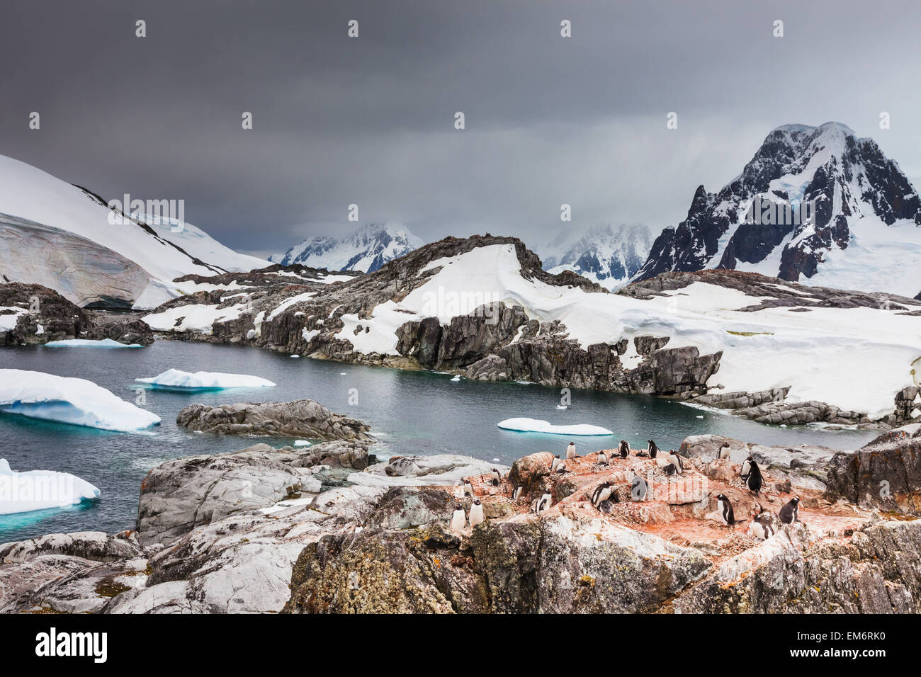 Gentoo penguins (Pygoscelis papua) and icebergs off the shore of Peterman Island; Antarctica Stock Photo