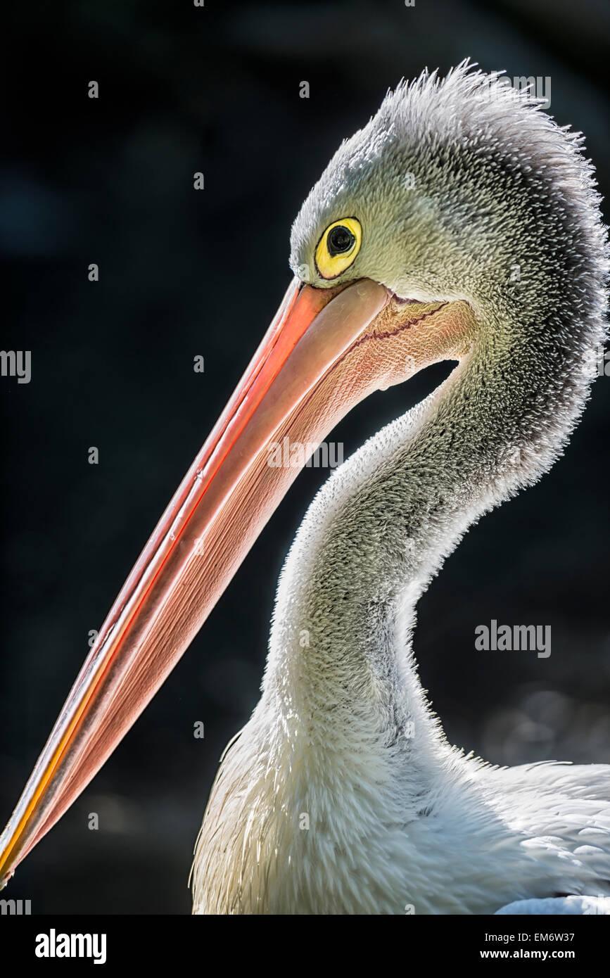 black bird with long beak stock photos black bird with long beak