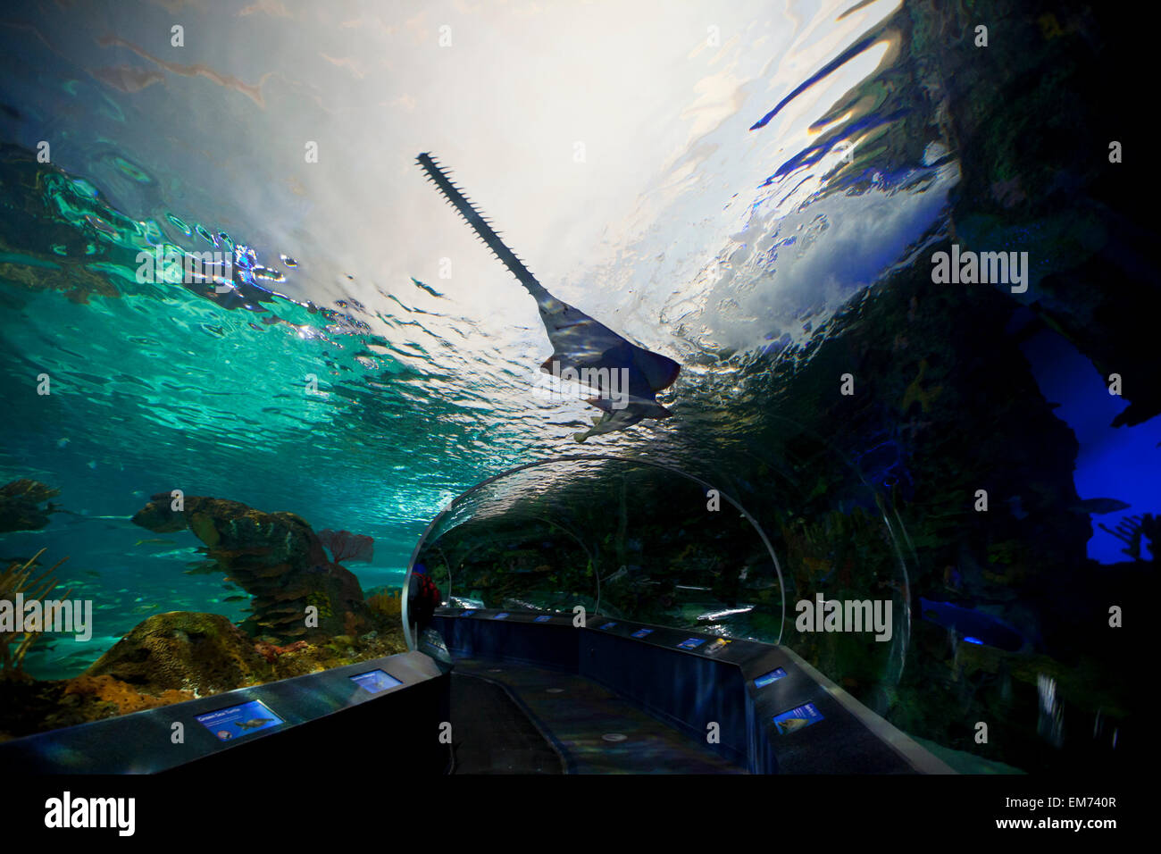 TORONTO- SEPTEMBER 15, 2014: The aquarium at Ripley's Aquarium Canada loacated at the foot of the CN tower in - Stock Image
