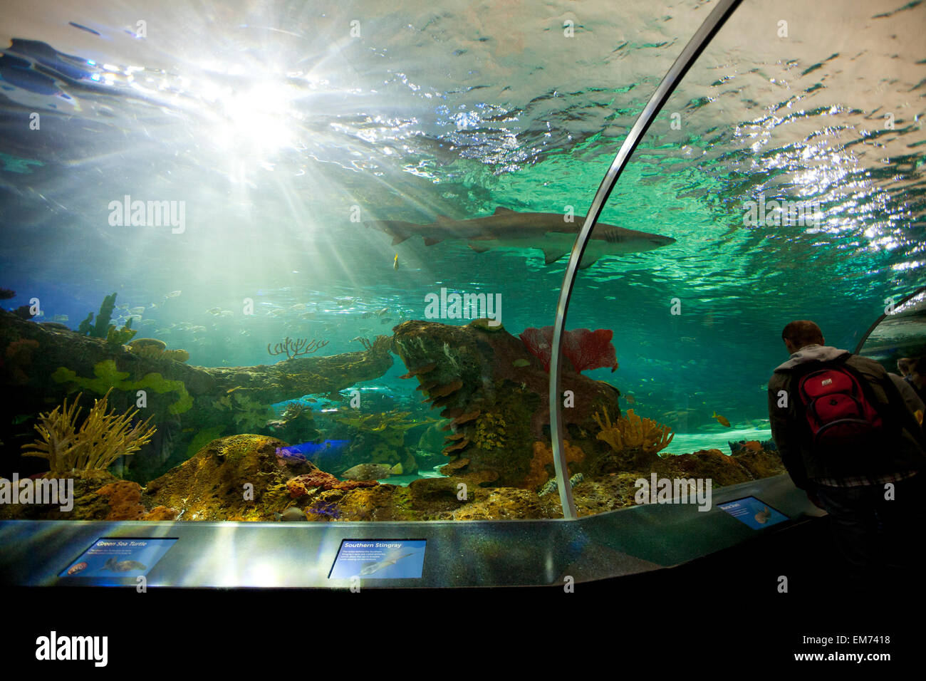 TORONTO- SEPTEMBER 15, 2014: Shark tank at Ripley's Aquarium Canada loacated at the foot of the CN tower in - Stock Image