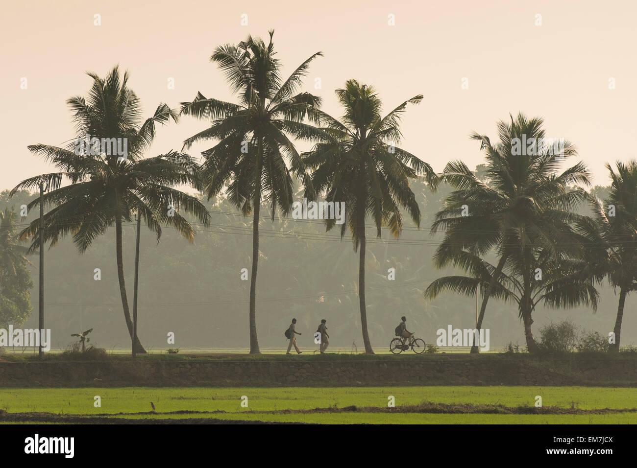 School children on the way home, palm tree avenue, Kerala, Malabar Coast, South India, India - Stock Image