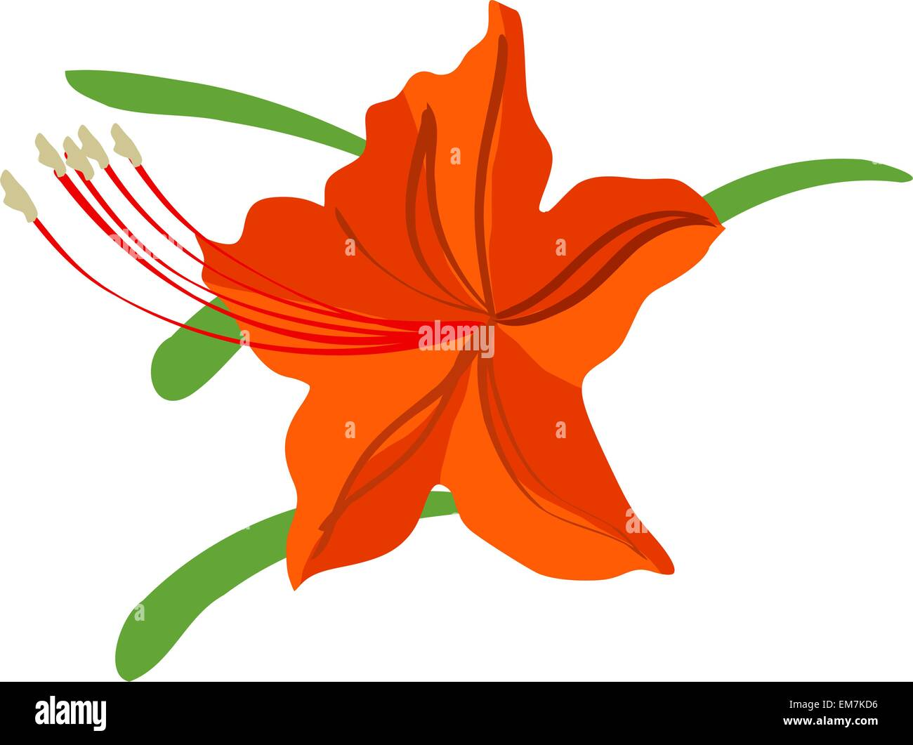 Rhododendron - Stock Vector