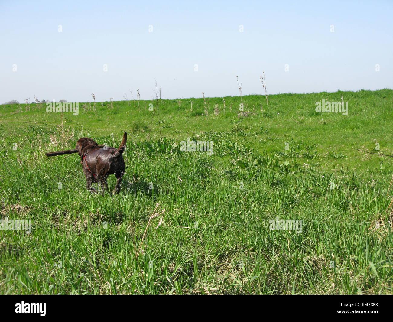 Running away Stock Photo