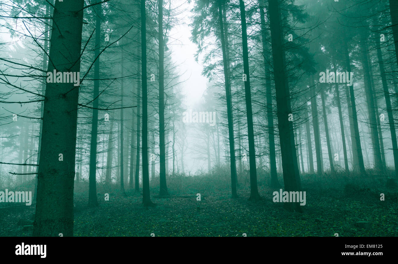 fantasy forest with fog in green stock photo 81311053 alamy