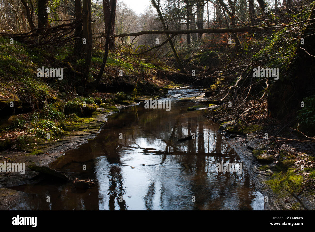 The Pont Burn River and Woods close to Hamsterley Mill in County Durham. - Stock Image