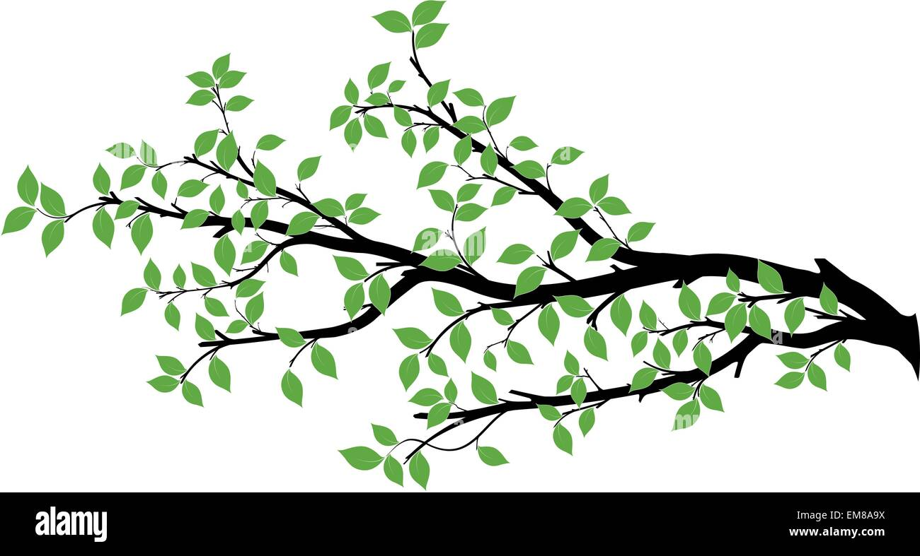 tree branch vector illustration over white background stock vector rh alamy com tree branch vector black tree branch vector root