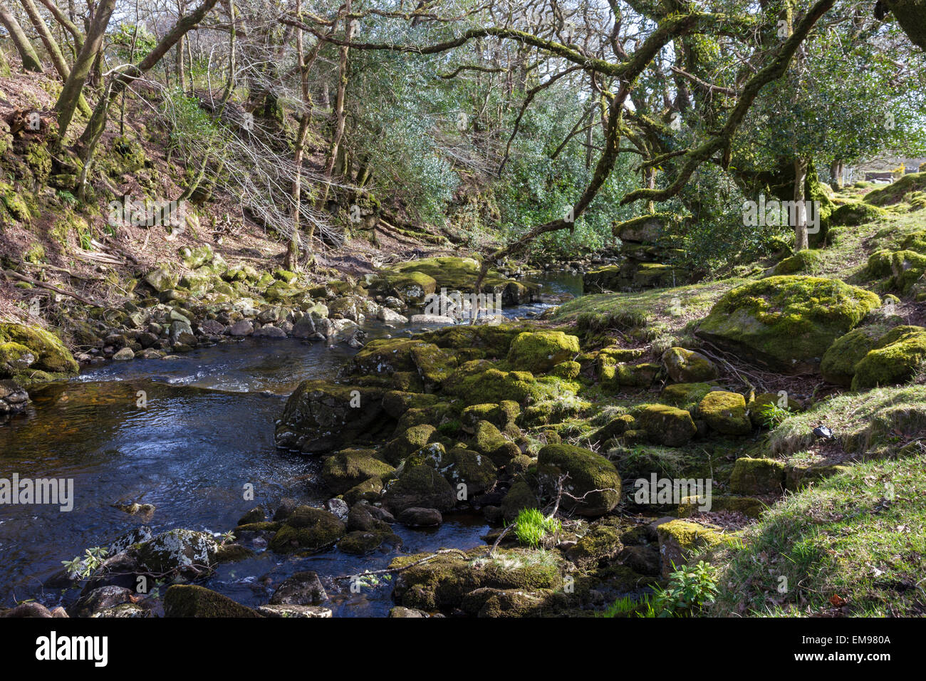 Mossy stones and branches, River Avon, South Brent, South Devon - Stock Image