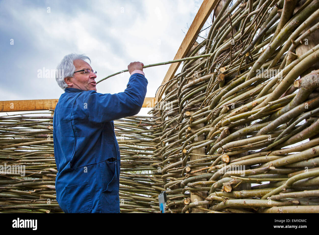 Craftsman making traditional wattle fence by weaving thin willow branches - Stock Image