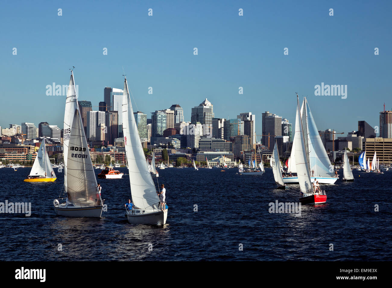WA10385-00...WASHINGTON - The Tuesday Duck Dodge in Seattle makes for a busy evening on Lake Union. (No MR). - Stock Image