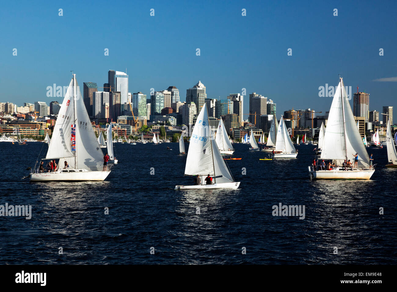 WA10387-00...WASHINGTON - The Tuesday Duck Dodge in Seattle makes for a busy evening on Lake Union. (No MR). - Stock Image