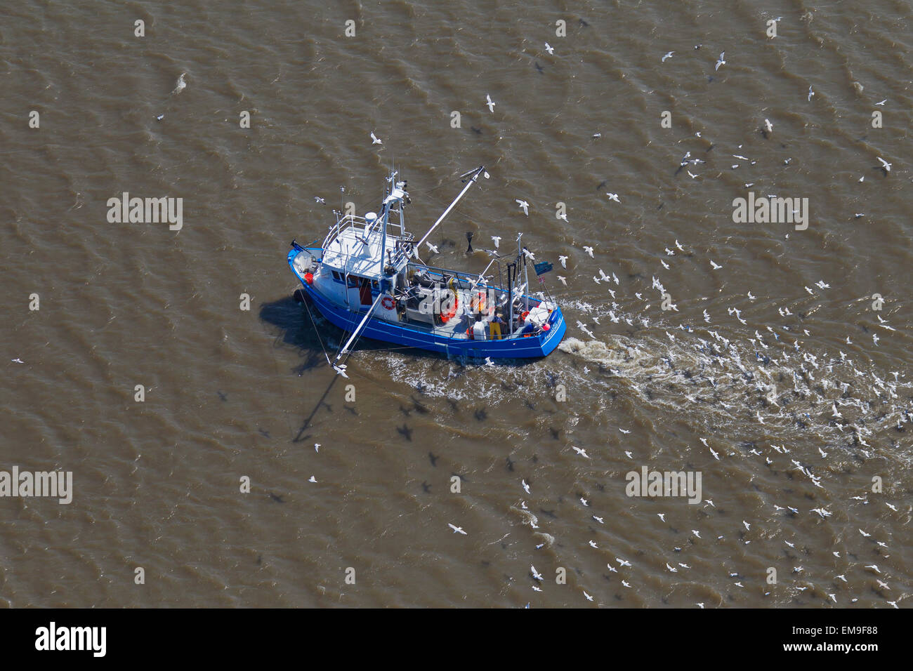 Aerial view of blue shrimp trawler boat fishing for shrimps at sea followed by seagulls Stock Photo