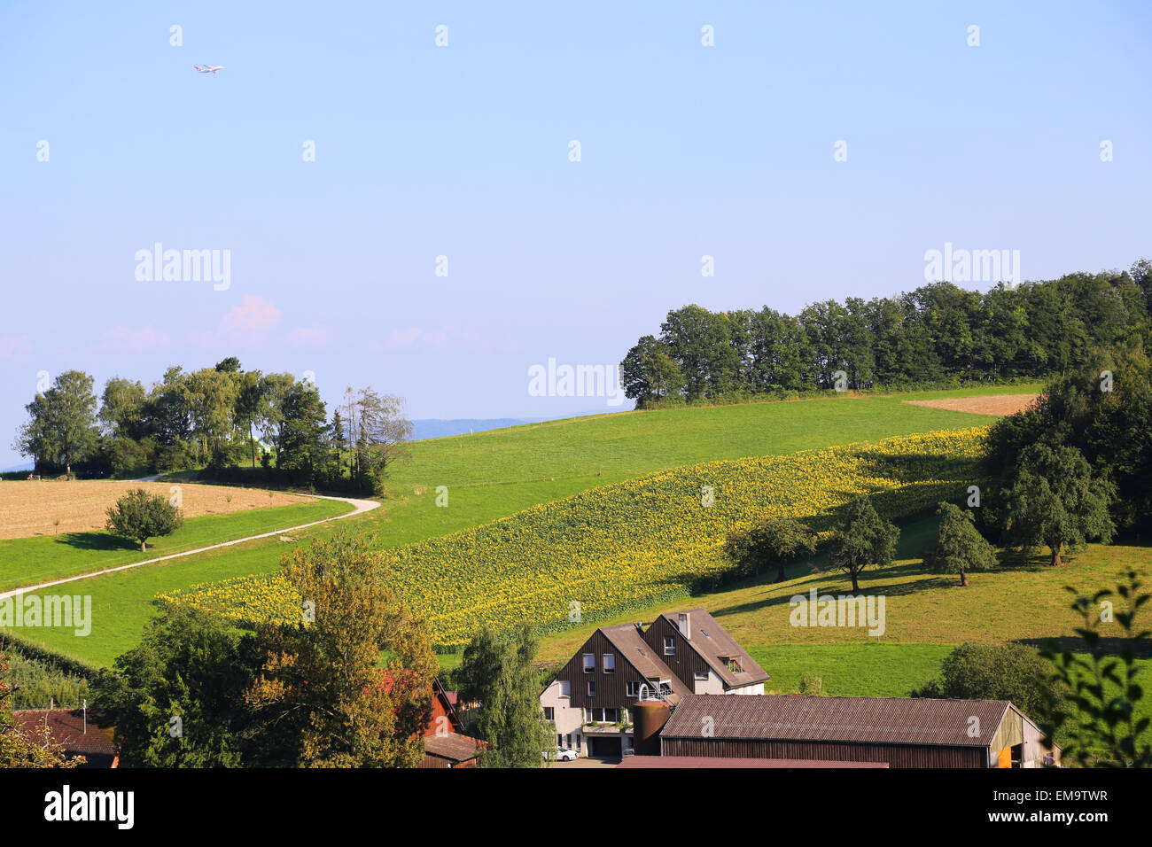 Green fields and trees in rural Switzerland Stock Photo