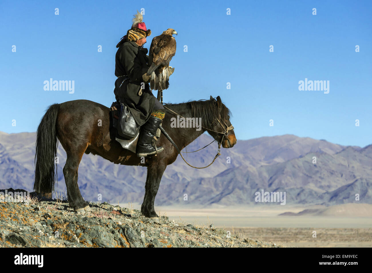 Kazakh eagle hunter about to let his eagle fly, Western Mongolia - Stock Image