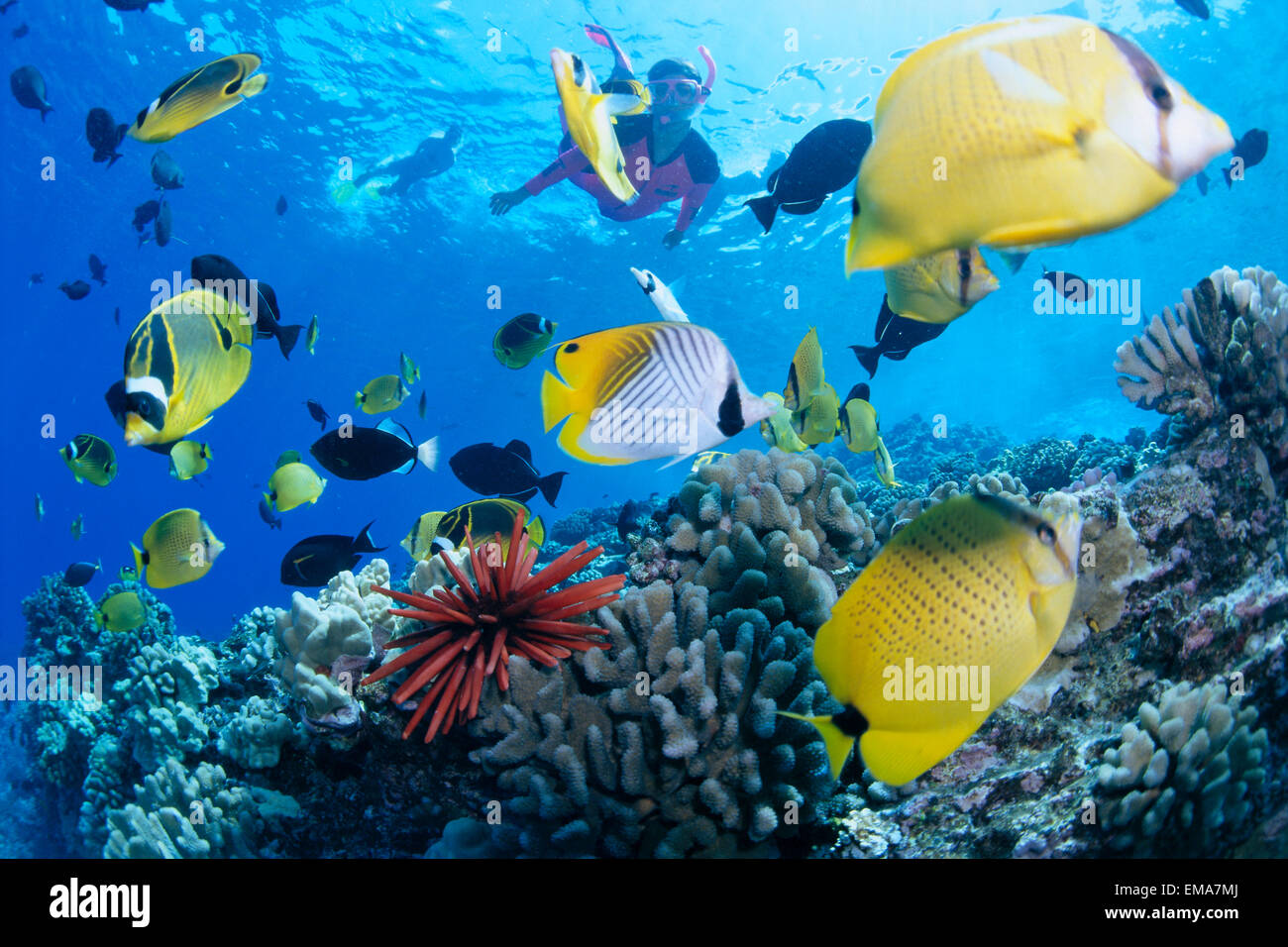 Hawaii maui molokini woman in pink snorkels with for Show me pictures of fish