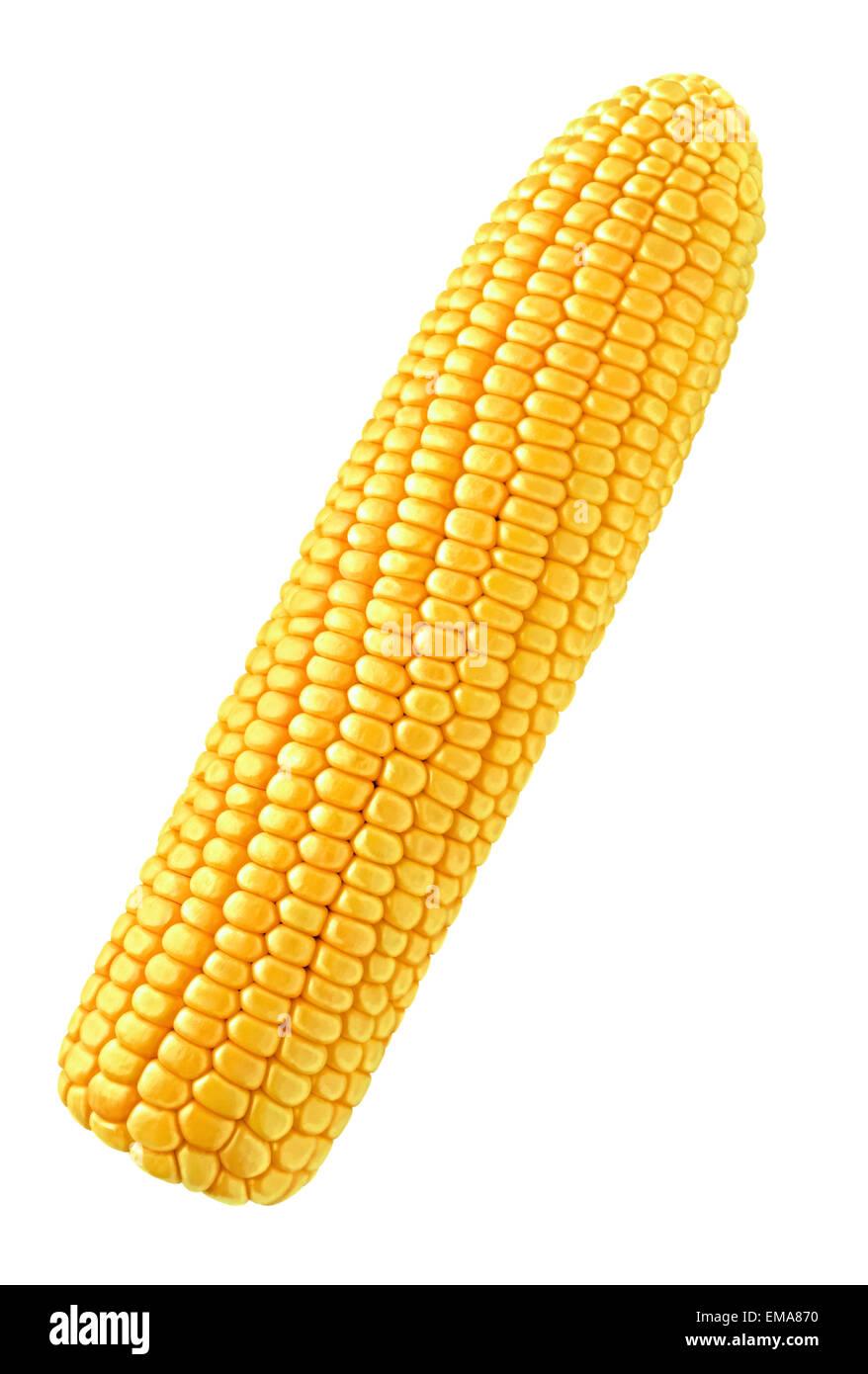Single corn isolated on white background - Stock Image