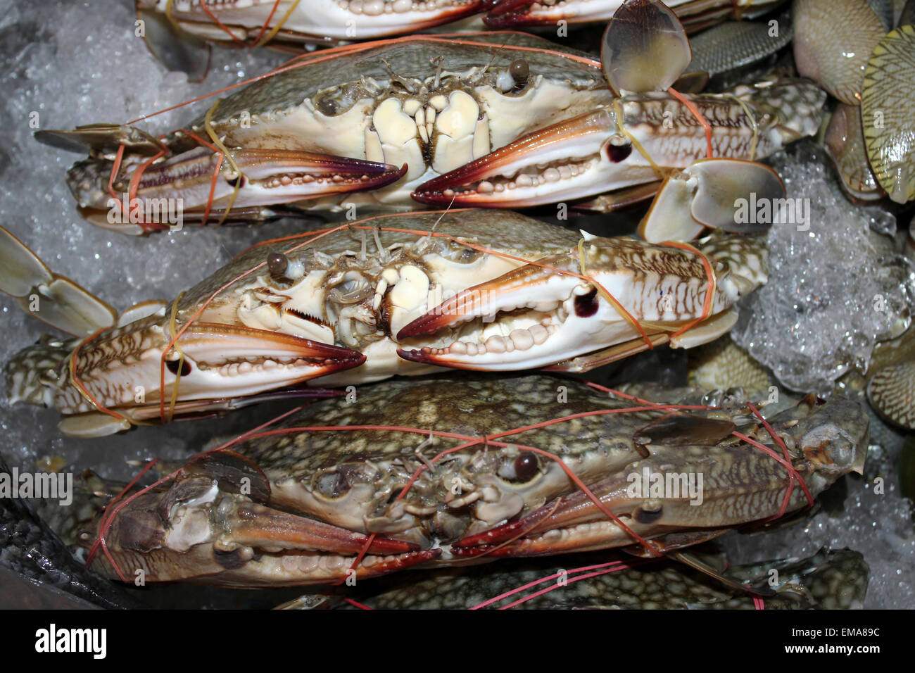 Fresh Crabs On Ice For Sale In A Thailand Market - Stock Image
