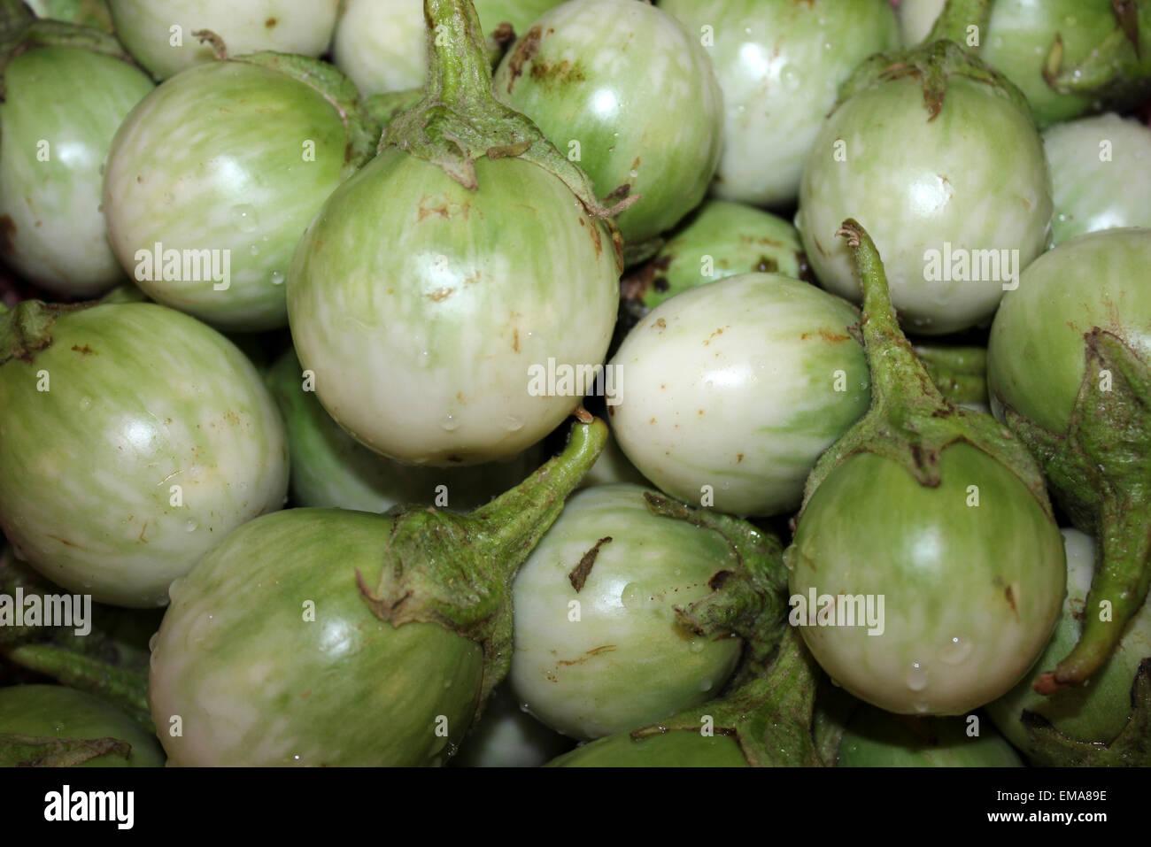 Thai Eggplant Solanum melongena locally known as Makhuea pro Stock Photo