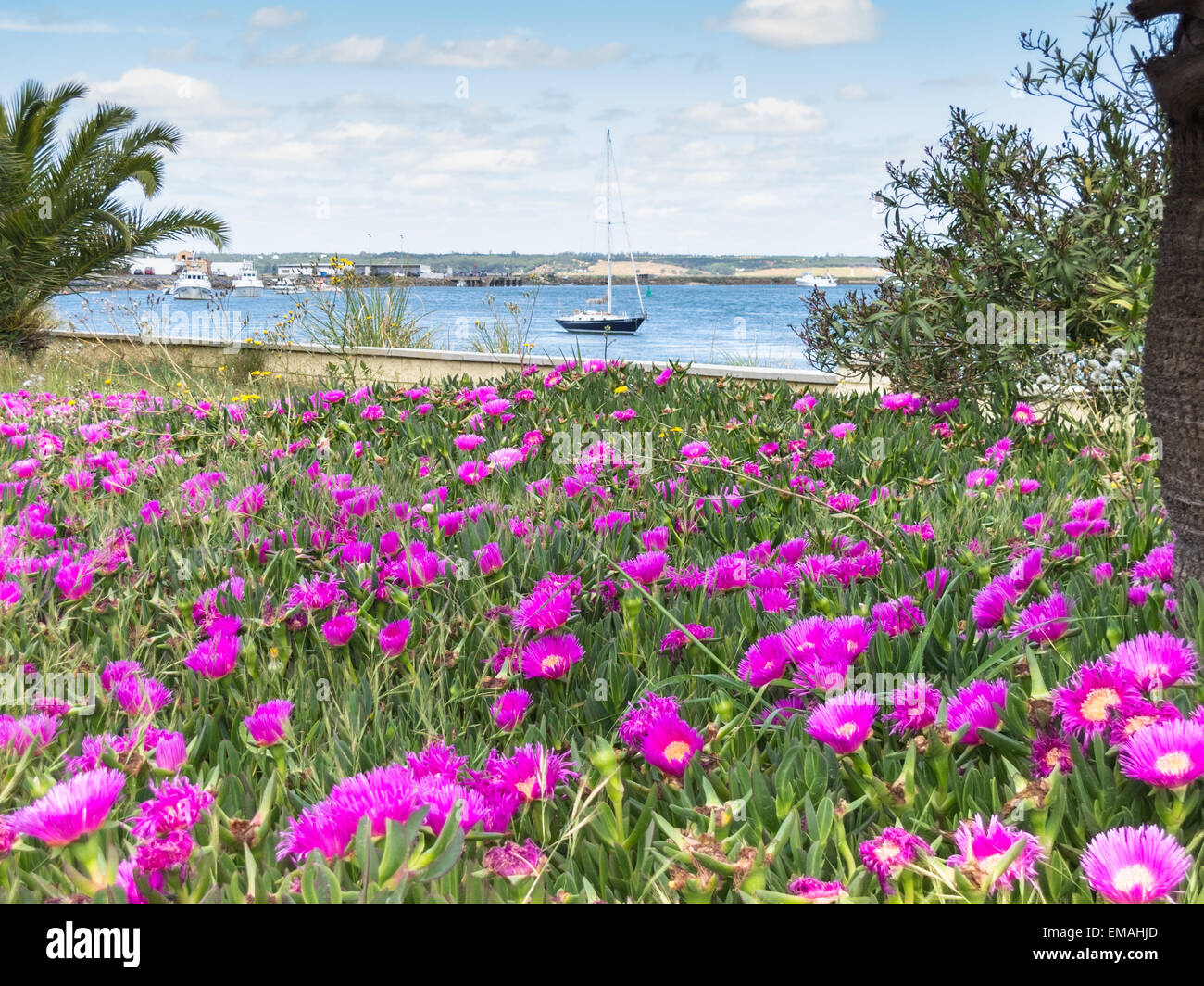 Punta de Moral, Spain. 18th April, 2015. Beautiful weather in Anadlucia and pretty pink flowers grow by the coast. - Stock Image