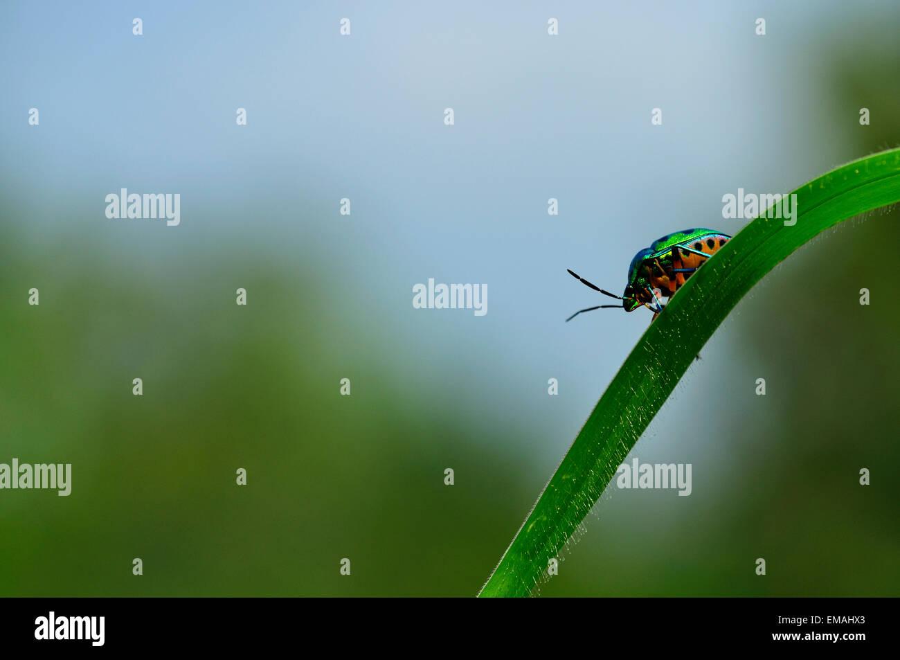 Jewel in jungle - Stock Image
