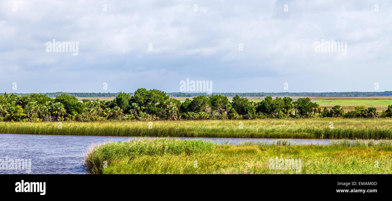 swamp land at Apalachicola with reed grass and a canal - Stock Image
