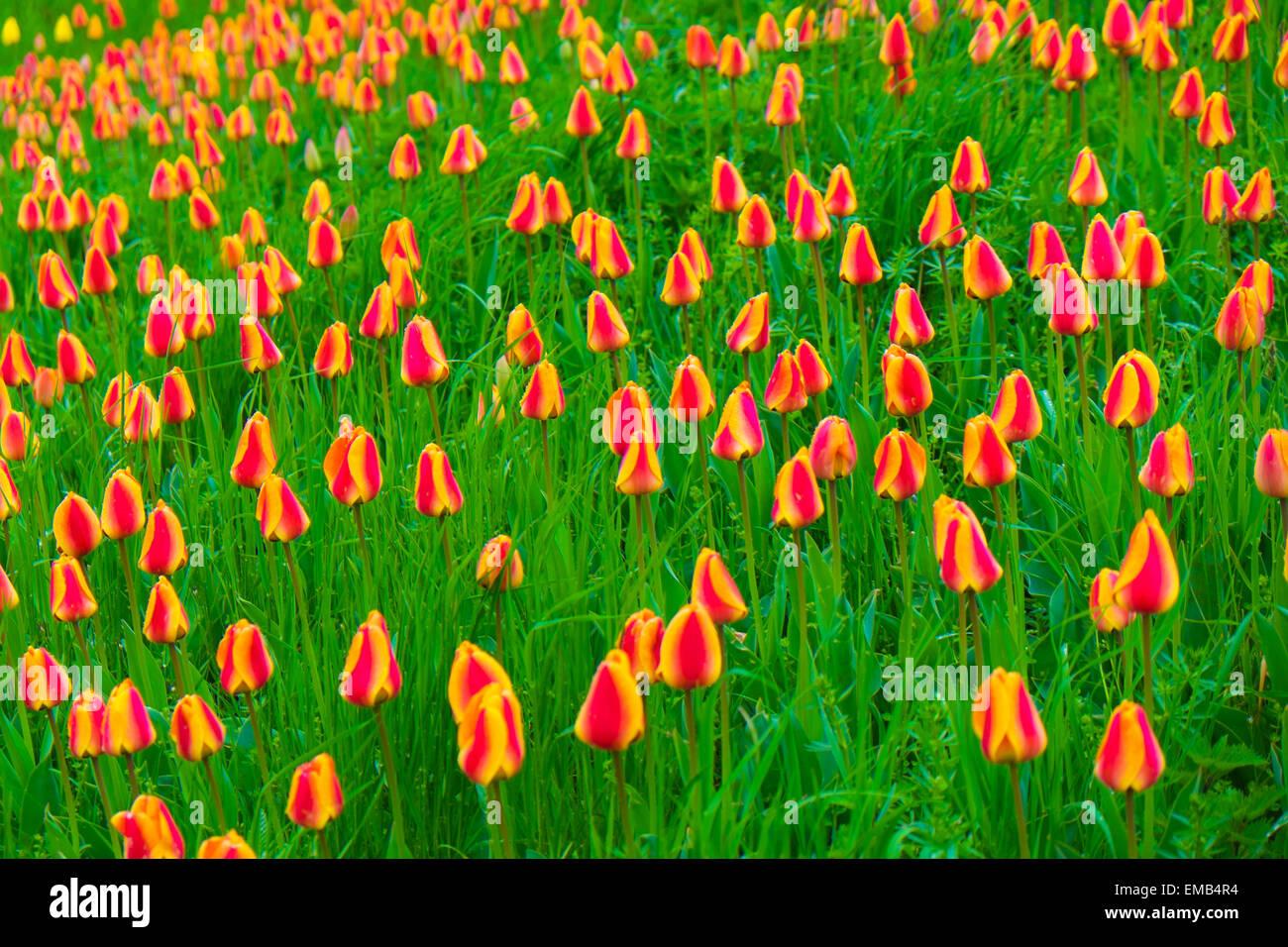 Flower Island of Mainau at Lake Constance - Stock Image