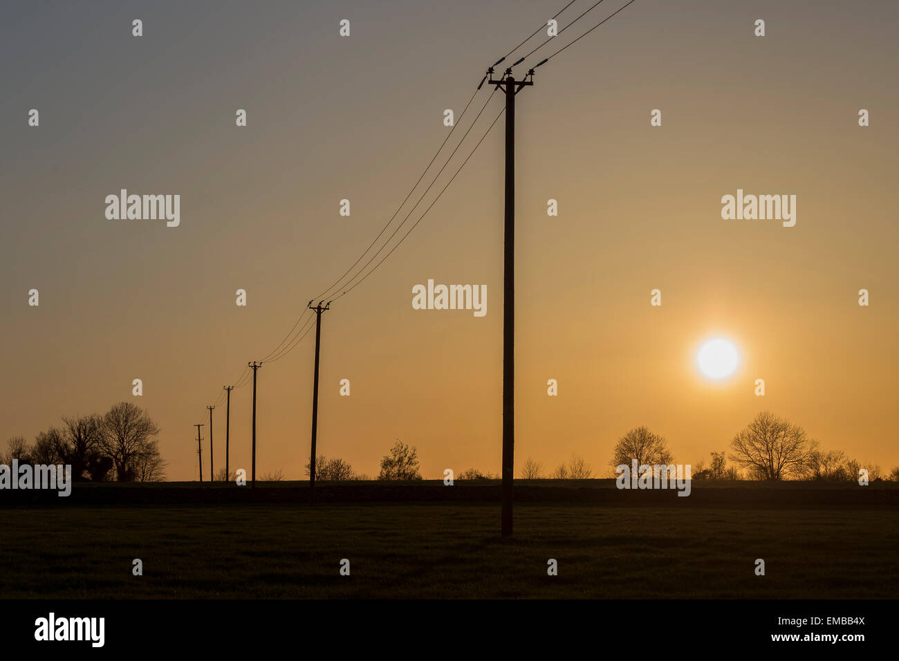 Electricity/telegraph poles in golden sunset form a line