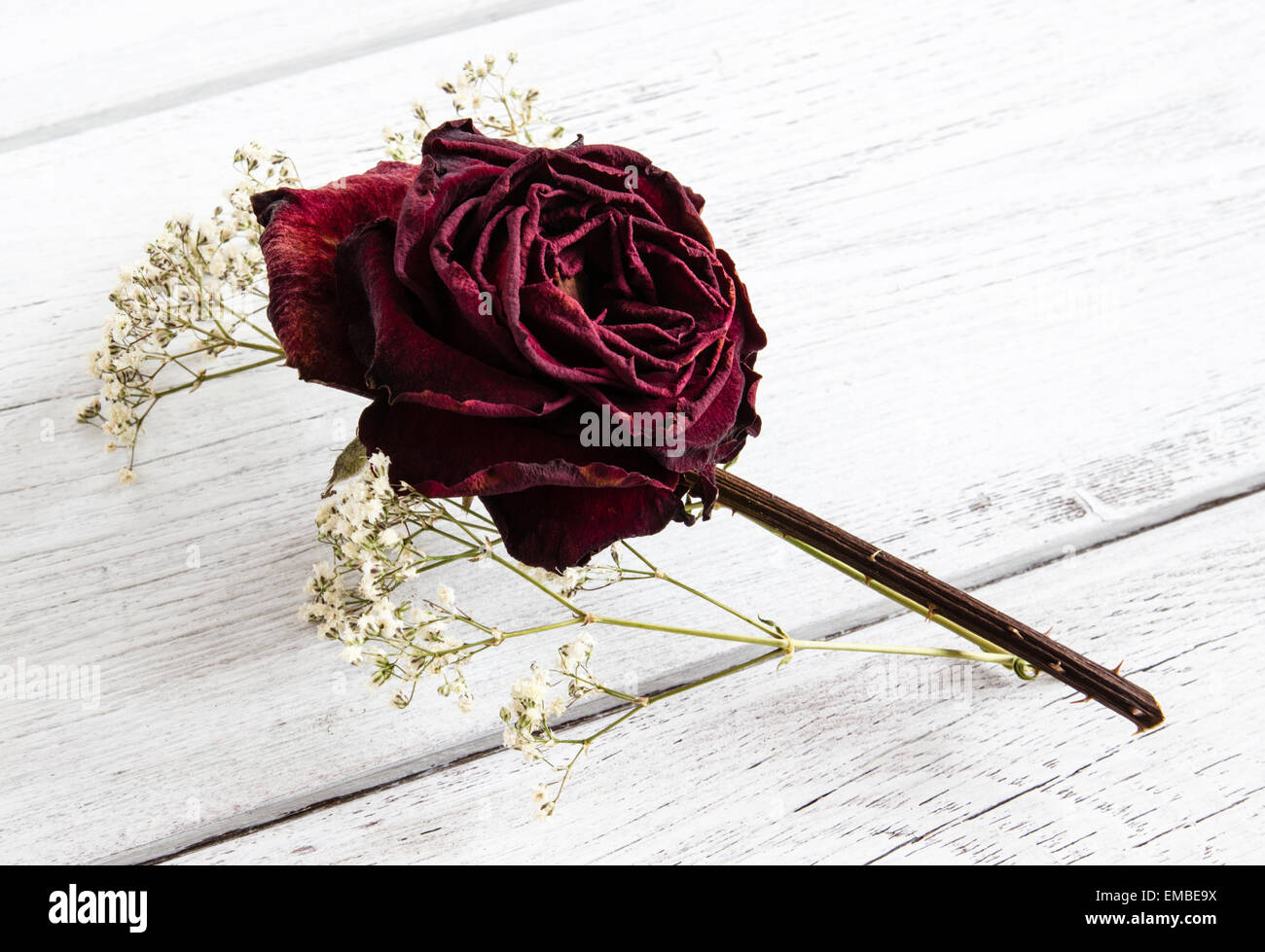 Dried red rose flower with gypsophila wedding buttonhole keepsake on white wood background - Stock Image