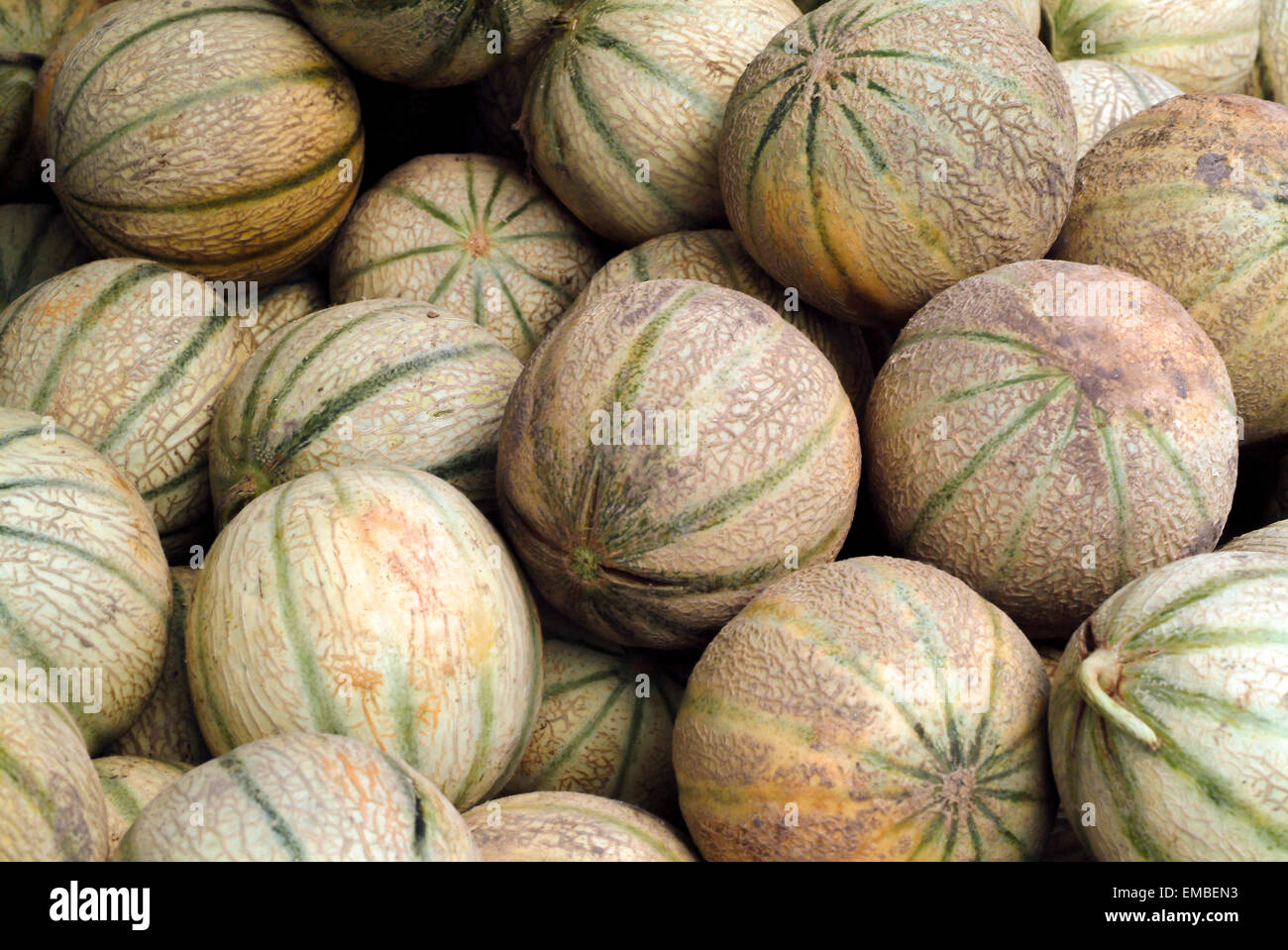 Muskmelon or cantaloupe or netted melon on a market stand in Provence France - Stock Image