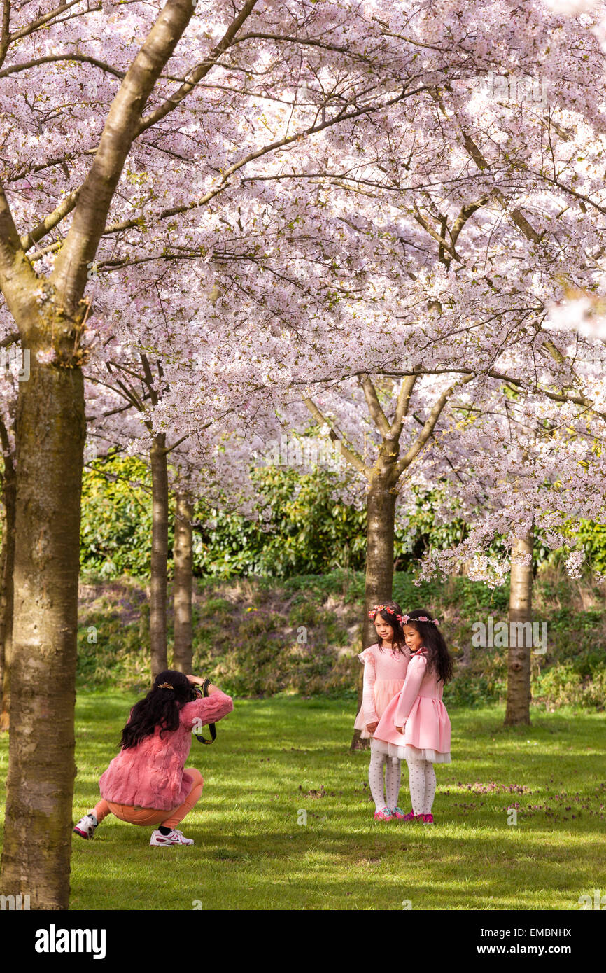 Amsterdam Amsterdamse Bos Bloesempark Cherry Blossom Park Mother taking pictures of daughters underneath Cherry - Stock Image