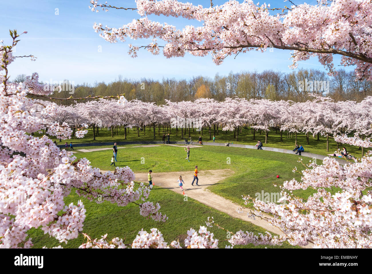 Amsterdam Amsterdamse Bos Bloesempark Cherry Blossom Park boys girls father children families playing soccer football - Stock Image