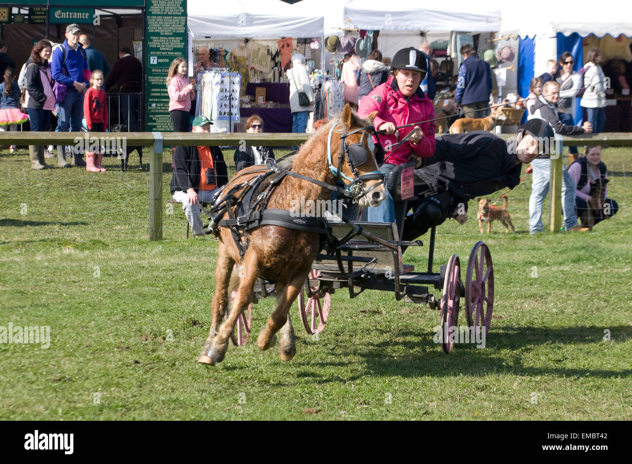 Double Harness Scurry Driving An Equestrian sport - Stock Image