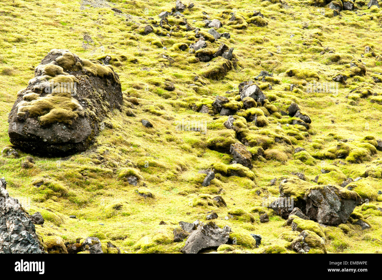 Lava field covered in green moss, South Iceland, Iceland - Stock Image