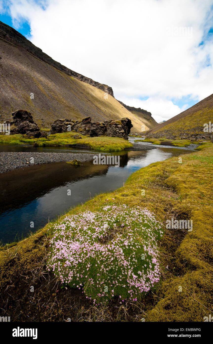 Eldgjá canyon, highlands, Iceland - Stock Image
