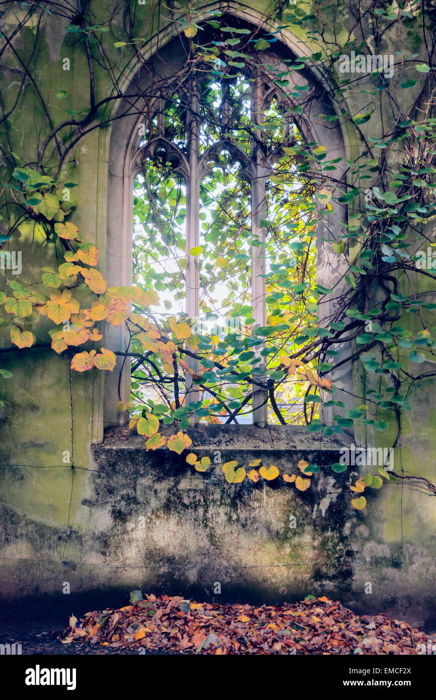 A Gothic window draped with ivy at St. Dunstan in the East Church garden in the City of London, UK. - Stock Image