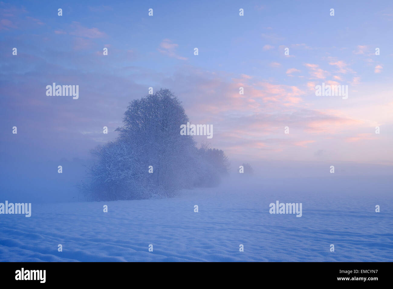 Germany, Gelting, mystical winter landscape at morning light - Stock Image